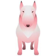 A Bull Terrier.