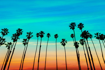 California sunset Palm tree rows in Santa Barbara Wall mural
