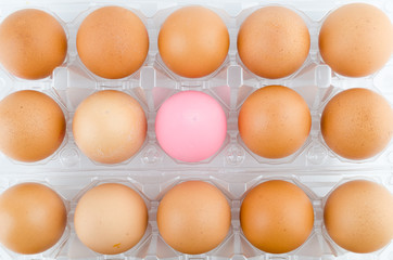 Eggs packed isolated white background