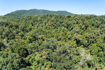 Tropical Jungle Birds Eye View