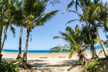 Beach Palm Trees Kayak Tropics Ocean