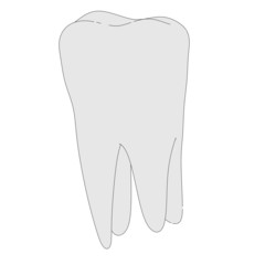 cartoon image of human tooth
