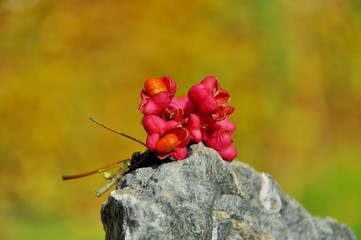Close up autumn seeds on stone background