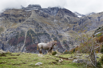 horses grazing in a meadow surrounded by mountains