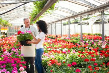 Fototapeta Greenhouse worker giving a plant to a customer obraz