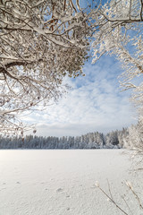 Winter wood lake