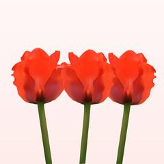 Nice red spring flowers