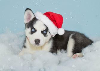Wall Mural - Santa Husky Puppy