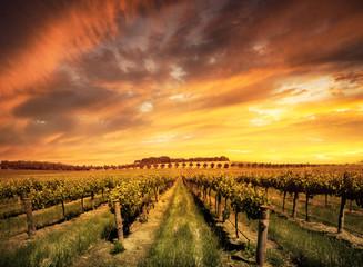 Fototapete - Morning Vines
