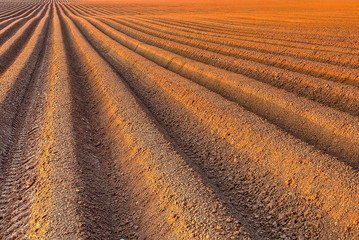 Plough agriculture field before sowing Wall mural