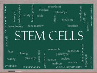 Stem Cells Word Cloud Concept on a Blackboard