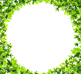 Green leaf circle shape isolated