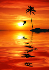 isla tropical al amanecer