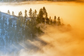 Fog coveres a forest of trees in the morning sunrise