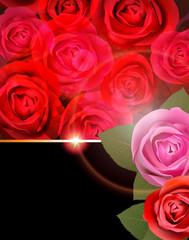 Rose Flower Background.