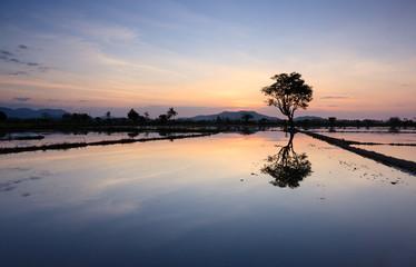 Reflection of sunset and single tree at Sabah, Borneo, Malaysia