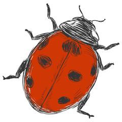 vector sketch illustration - ladybug