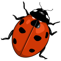 vector cartoon ladybug