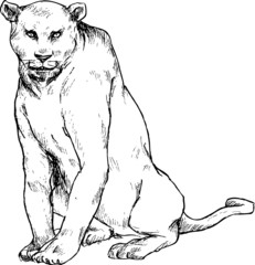hand drawn couger panther