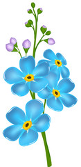 illustration with forget-me-not flower
