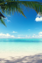 Fototapete - Caribbean sea and coconut palms