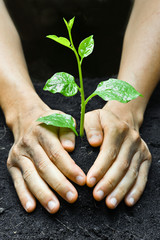 two hands holding and caring a young green plant