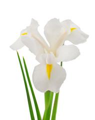 Deurstickers Iris white iris flower