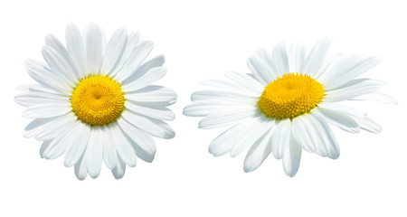 Photo sur Toile Marguerites Camomile isolated on white background