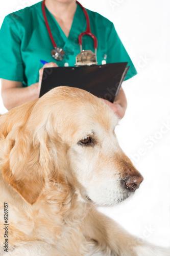 seizures in older dogs - 533×800
