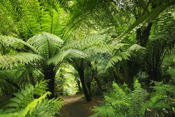 Farnwald in Australien