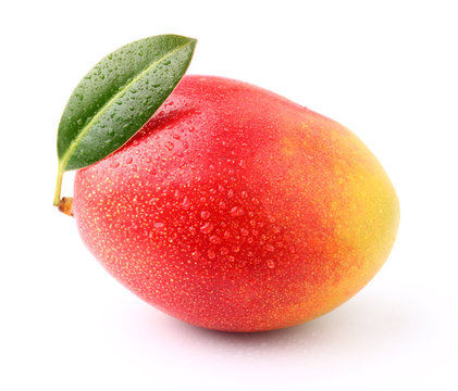 Ripe mango with drop water