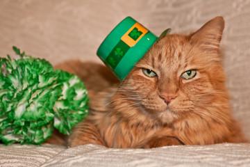 St. Patrick's Day Cat