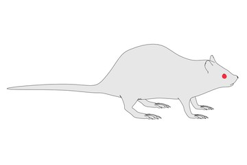 cartoon image of rat animal