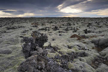 Lava field at Iceland.