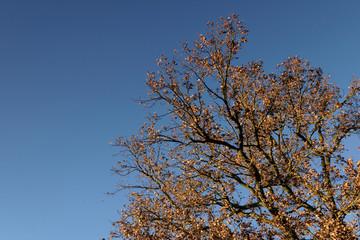 Sommerlicher Herbsttag