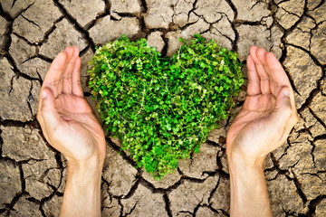 hands holding heart shaped tree on cracked earth / growing tree