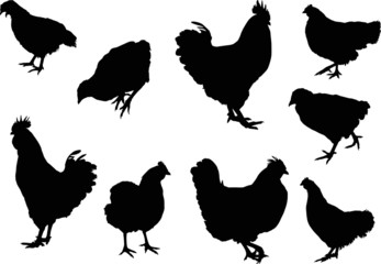 nine chicken silhouettes isolated on white