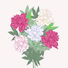 Bouquet with two pink and white peonies.Vector illustration