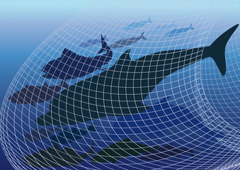 Harmful fishing  Network