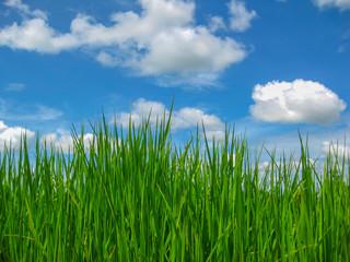 sky, grass
