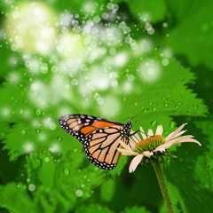 abstract spring background with flower and butterfly