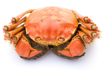 top view cooked crab on a white background
