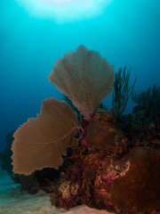 images from caribbean coral reef