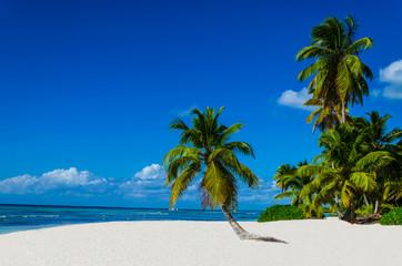 Fototapeta Tropical sandy beach with palm trees, Dominican Republic obraz