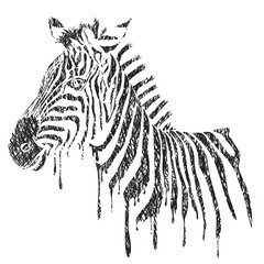 Zebra - vector black and white illustration, sketch