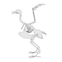 cartoon image of bird skeleton
