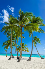 View of an exotic beach with tall palm trees and yellow sand