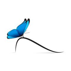 papillon-courbe à gauche