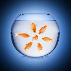 Wall Mural - fishbowl mobbing concept