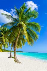 Fototapeta Sandy beach with palm trees, Dominican Republic in Caribbean